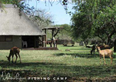 Nkonkoni wildlife campsite