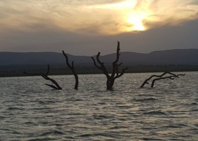 Nkonkoni Fishing Camp tree in dam